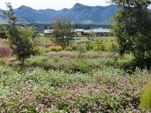 コスモス・花公園%20034
