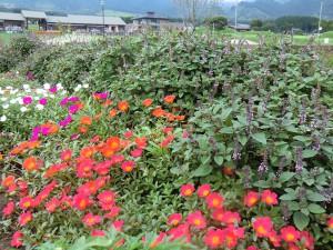 花公園%20011