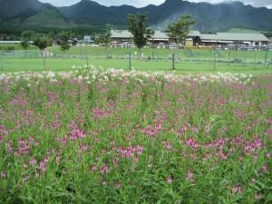 花公園%20018(1)